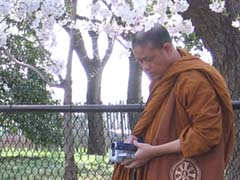 monks enjoying blossoms